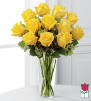 Beretania's Premium Yellow Rose Masterpiece (30% Larger flower)