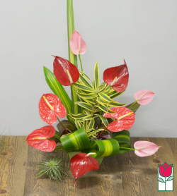 <b>[SOLD OUT]</b> Beretania's Lovely Hawaiian Tropical Bouquet  <b>[Tropical Varieties Vary] </b>