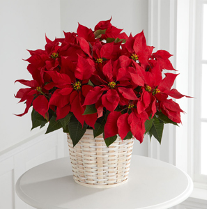 Le panier Poinsettia rouge de FTD® (grand)