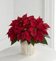 The FTD® Red Poinsettia Basket (Small)