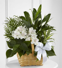 The FTD® Peace & Serenity™ Dishgarden