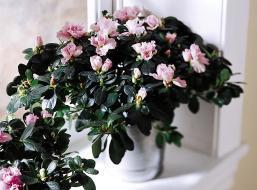 The FTD® Azalea (Large)