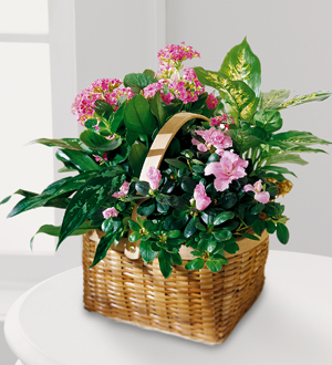 Sunnyslope Floral The FTD® Pink ortment Grandville, MI, 49418 FTD on plants to send for sympathy, plants for funeral service, plants for cemetery, plants given at funerals, plants for church, plants sent to funerals, plants for a funeral,