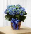 The FTD® Blue Hydrangea Planter
