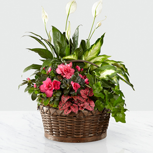 The FTD® Dream in Pink™ Dishgarden