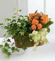 The FTD® Kalanchoe & Ivy Planter