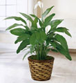 The FTD� Spathiphyllum