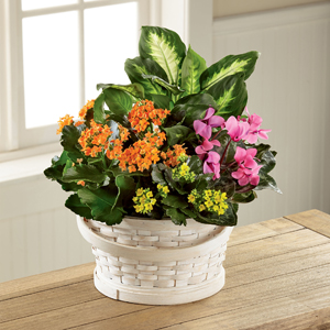 The FTD® Color Crush™ Dishgarden