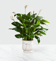 The FTD� 8 inch Comfort� Planter