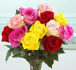 1 Dozen Mixed Color Medium Stem Roses - Wrapped