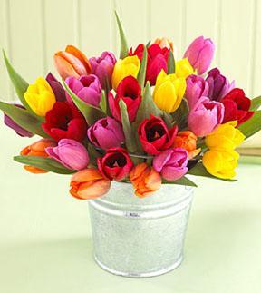 30 Stem Mixed Tulip Pail