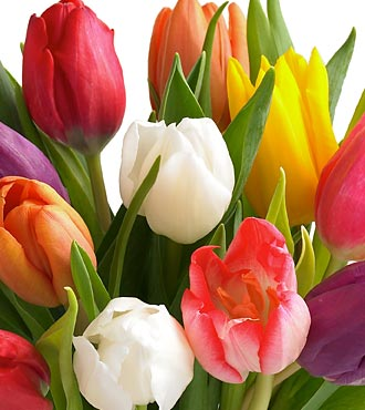 20 Stem Mixed Tulip Bouquet