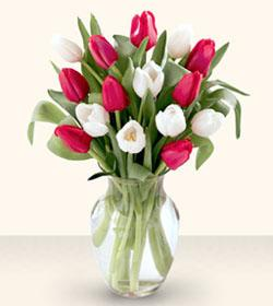 15 Stem Red & White Tulips with a Vase