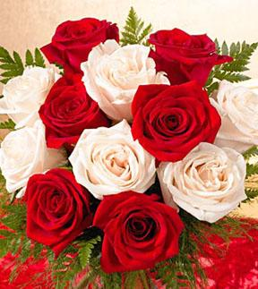 1 Dozen Favorite Red and White Roses Wrapped