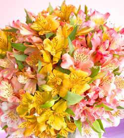 Mixed Peruvian Lilies Bouquet - Wrapped
