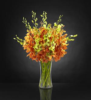 Flowers by karen inc daybreak luxury orchid bouquet ocean springs daybreak luxury orchid bouquet mightylinksfo