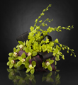 The FTD� Evening Glamour� Luxury Bouquet