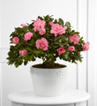 The FTD� Vibrant Sympathy� Planter