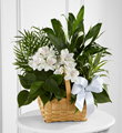 The FTD� Peace & Serenity� Dishgarden