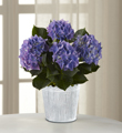 The FTD® Vintage Beauty Hydrangea Plant by Better Homes and Gardens®