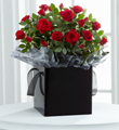 Pure Elegance Mini Rose Plant
