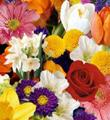 Le bouquet emball� Cr�ation du fleuriste de FTD�