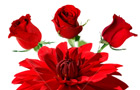 We offer a larger variety of Flowers Roses Plants and Gifts