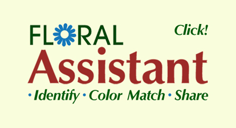 Interactive Virtual Wedding Consultations