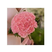 TRADITIONAL PINK CARNATION BOUQUET