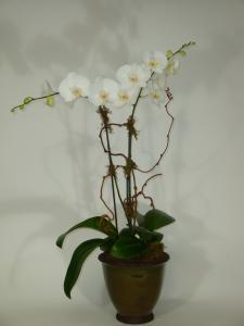 Awesome Orchids