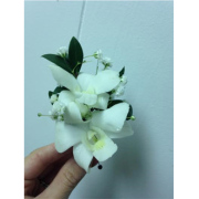 WHITE ORCHID BOUT