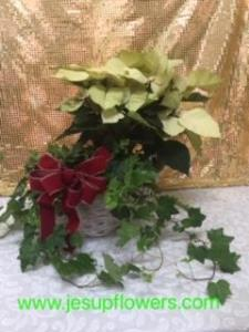 6 in poinsettia and 6 in ivy in basket with bow