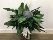 Peace Lily Plant with Memory Stake