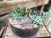 SUCCULENT GARDEN IN GALVANIZED CONTAINER