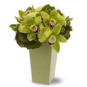 Autumn Green Orchid Vase Bqt