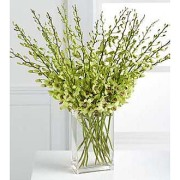Beautiful Fall Abundant Orchid Stems Vased 20  Stems vased