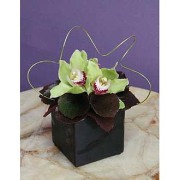 Orchids N Greens in Ceramic Cube