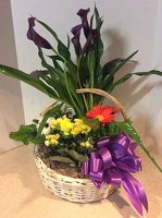 Exotic Blooming Plant Basket
