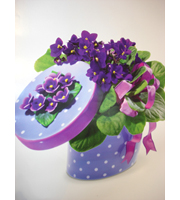 African Violet Asst Pot (due to availability)