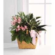 SYMPATHY PLANT GARDEN - PINK ACCENTS