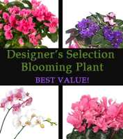 Blooming plants for same day delivery in Grand Rapids, Byron Center, Holland, Walker and Rockford by Sunnyslope Floral, your local delivery specialists
