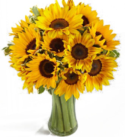 Sunflower Show Stopper