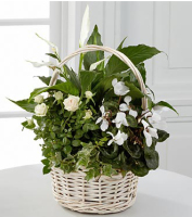 Blooming & green plants for same day delivery to the home, business or funeral home in Grand Rapids, Mi or worldwide with Sunnyslope Floral