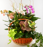 Orchid Dishgarden