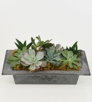 Succulents in Slate