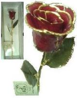 Real Rose Trimmed in 24 Kt Gold