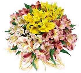 Mixed Alstromeria Bouquet