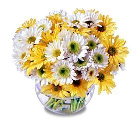Bowl of Daisies