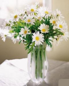 Vase of Daisies