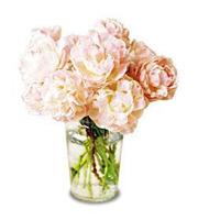 Pink Peony Vase